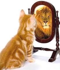 lion cat.jpeg